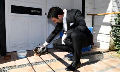 Beşiktaş Belediyesi evcil hayvan satışını yasaklıyor